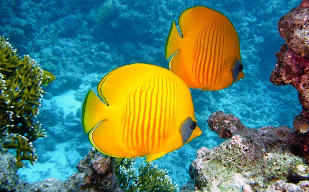 Client Snapshot: Bulk Reef Supply